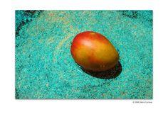 Mango Blue Bath by Debra Cortese