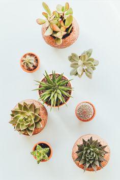 Kaktus eller Sukkulenter er planter som lagrer vann i bladene, stammen, eller lignende. Derfor er dette planter som kan tåle lange perioder med lite vann, og som trives godt i det fuktige miljøet som baderommet er. Les mer om hvilke planter som trives på badet på bademiljo.no! Foto av Annie Spratt, Unsplash. Plant Images, Plant Pictures, Succulent Arrangements, Planting Succulents, Rare Succulents, Backyard Picnic, Succulent Care, Low Maintenance Plants, Flat Lay Photography