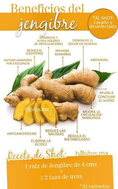 Beneficios del Jengibre #hábitosmx #hábitos #salud #health
