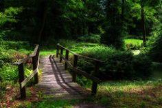 Landgoed - Estate Nienoord Leek Netherlands (Reina Smallenbroek) Tags: bridge trees green netherlands bomen groen shadows forrest brug groningen bos leek schaduwen westerkwartier nienoordleek groningerwesterkwartier reinasmallenbroek