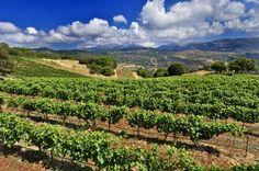 Αμπελώνες Αντωνόπουλου / Antonopoulos Vineyards