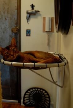 Wall-Mounted Handmade Steel Cat Hammock - our cat would love this especially if put where the sun shines in.
