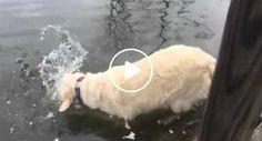 Cão Inteligente Captura Peixe Usando Pedaço De Pão Como Isco