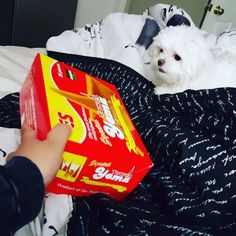 I dont care if you are my dad's favorite sweets, I hate you so dont come near me. 😂😂😂 #yema #yemavsangel #sweets #notinthemood #pinoysweets #maltese #malteseofinstagram #puppyproblems #puppy #badmood #vegas #vegaslife #lasvegas #food #lovehate #followme #petslife #pets #puppylove
