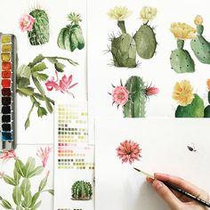 Most cactus species