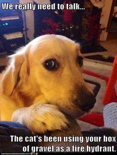 Hotdog - golden retriever - Page 4 - Loldogs n Cute Puppies - funny ...