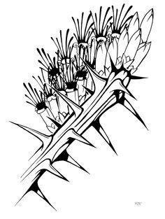 desert ocotillo in leaf original pencil drawing