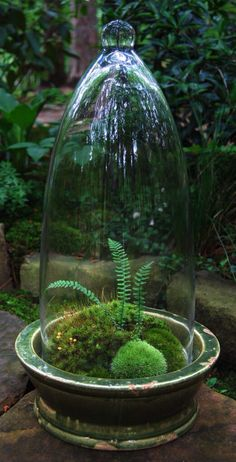 Moss....... with a tiny fern..i love this idea...for any room in the house…