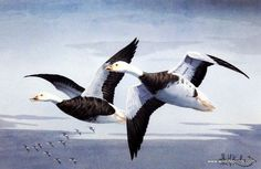 Les Kouba Blue Geese