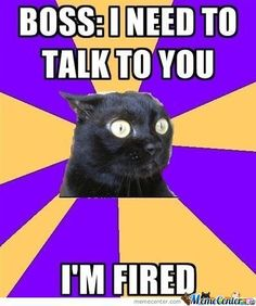 Anxiety cat on talks with the boss. This JUST happened to me.