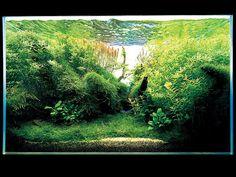 #fishtank