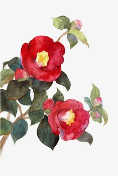 Newest Screen red Camellia Thoughts Camellia is actually a cherished evergreen shrub or perhaps shrub that will cheers any shady region Watercolor And Ink, Watercolour Painting, Watercolor Flowers, Botanical Flowers, Botanical Prints, Simple Oil Painting, Japanese Flowers, Cute Art, Flower Art
