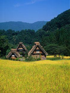 青空と黄金色の田と三棟の合掌造り(縦1024x768) by Go Uryu, via Flickr