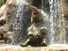 I. Love. Elephants.