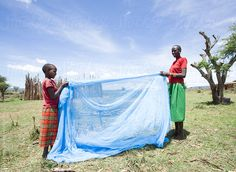 Mother and daughter preparing mosquito net for the daughter's sleeping area. by Hugh Sitton - Stocksy United Mosquito Net, Daughter, Medical, Sleep, The Unit, Stock Photos, Image, Daughters, Medicine
