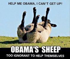 Obama's sheep.