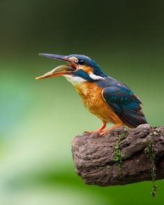 King fisher ~ Love for Earth: Photo