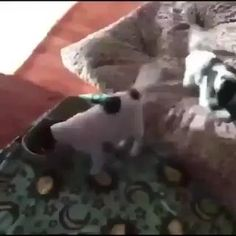 Cute Funny Dogs, Cute Funny Animals, Wtf Funny, Funny Cats, Hilarious, Cute Animal Videos, Funny Animal Pictures, Funny Images, Funny Dog Videos
