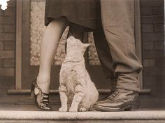 i wish i could have done this for my engagement photos w/ my cat.