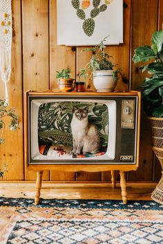 Mid Century Cat Bed - I made a bed for my cat out of an old TV! Photo by Jess Woodhouse Photography Portland, OR - Cool Cat Beds, Cool Cats, Pet Furniture, Recycled Furniture, Furniture Ideas, Cheap Furniture, Furniture Design, Recycled Home Decor, Wooden Furniture