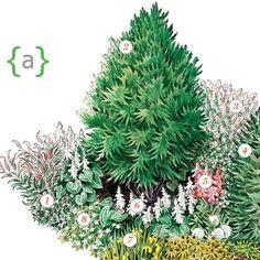 "1. Hardy geranium; (Geranium x oxonianum 'Claridge Druce')2. Katsura tree; (Cercidiphyllum japonicum)3. Manchurian lilac; (Syringa pubescens patula 'Miss Kim')4. Korean fir; (Abies koreana)5. Chinese astilbe; (Astilbe chinensis 'Visions')""]  6. Hosta; (Hosta sieboldiana)7. Yellow flag iris; (Iris pseudacorus)8. Milky bellflower; (Campanula lactiflora 'Pouffe')"