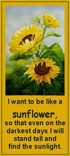 I want to be like a sunflower, so that evenon the darkest days I will stand tall and find the sunlight. Sunflower Quotes, Sunflower Art, Sunflower Images, Sunflower Paintings, Sunflower Design, Happy Flowers, Beautiful Flowers, Sun Flowers, Sunflowers And Daisies