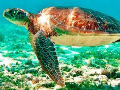 Con el Tour Akumal y Cenote nada con Tortugas marinas y conoce el Cenote el Sueño en un solo día. Reserva ahora con MexFun!