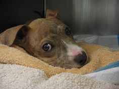 Joey had a miraculous recovery after he was thrown from car and was initially paralyzed. Police are still searching for those responsible. A lottery will soon be held to pick who will take the little pup home.