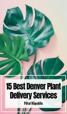 Plants make great additions to our homes. Not only do they look stunning and add character to almost any setting, but they also help to reconnect us with nature and purify the very air we breathe. Here you'll find 15 great Denver plant delivery services today curating a sumptuous array of indoor house plants, outdoor and patio plants, succulents, cacti, and more. Patio Plants, Indoor Planters, Outdoor Plants, House Plants, Small Plants, Cool Plants, House Plant Delivery, Easy Care Plants, House Plant Care