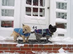 Col. Potter Cairn Rescue Network:  Maisie and Murry