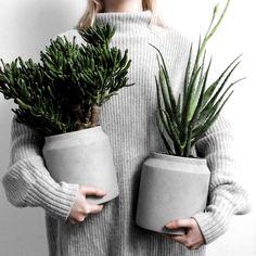 Beste Pflanzen Indoor Apartment Aloe Vera 31+ Ideen, #Aloe #Apartment #Beste #Ideen #indoor #Pflanzen #Vera