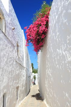 Alley in Patmos island! Greece Islands, Bougainvillea, Greece Travel, The Locals, Places Ive Been, Travelling, Dream Land, Country, Nature