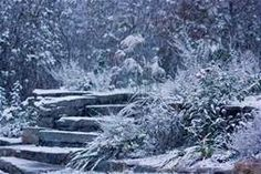 Winter's Gardens - Yahoo Image Search Results