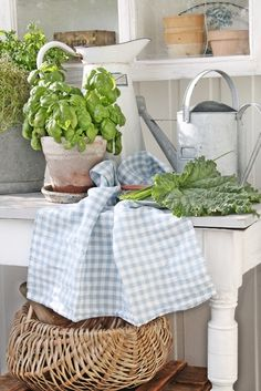 A potting of basil, And some chard for tonite's salad. And, there's my tea towel I've been looking for........