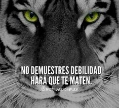 matter of faith, matter of love . Tiger Quotes, Ariadne Diaz, Spanish Quotes, Powerful Words, Animals And Pets, About Me Blog, Inspirational Quotes, Faith, Messages