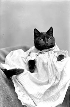 Adorable black cat in a baby's gown.