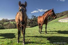 La curiosidad del caballo ~ Fotografía Juanjo Mediavilla