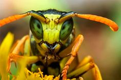 macro photos | 40 Amazing Examples of Macro Photography | Inspiration