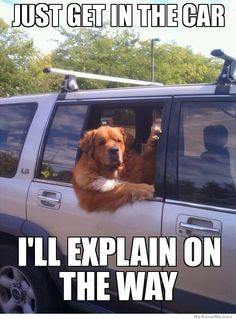 just-get-in-the-car-dog