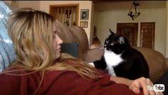 「なでるのやめないでニャン」ナデナデが欲しい甘えん坊な猫ちゃん