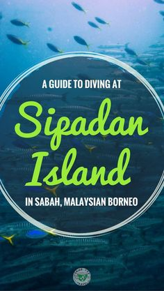 Planning a diving trip to Spadan Island in Sabah Malaysia? Here is complete guide to diving in Sipadan Island containing all the information you need to plan and book your trip.