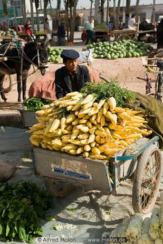 Man with Turnip cart, Kashgar, PRChina.  The westernmost city near the border with Tajikistan and Kyrgyzstan. Alfred Molon