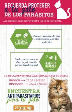 Cuidar a tu perro de los parásitos evita problemas de comportamiento y problemas secundarios de salud.