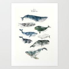 Buy Whales by Amy Hamilton as a high quality Art Print. Worldwide shipping available at Society6.com. Just one of millions of products available.