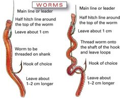 How to string a worm on a fishing hook