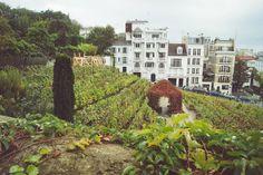 La vigne de Montmartre est la plus ancienne de la capitale. Elle est constituée des variétés les plus classiques des provinces viticoles de France, ainsi que d'une sélection d'hybrides vigoureux et fertiles. Les fêtes des vendanges commencèrent à Montmartre dès 1935. #nolinskiparis #conciergeselection #vignesdemontmartre #evokhotelscollection