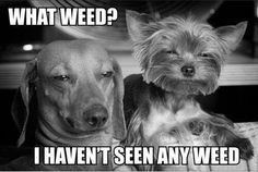 what weed? i havent seen any ;)