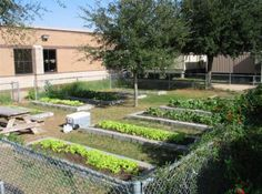 This is a great idea for each class to have its own garden plot.