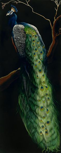 Peacock by Sally Maxwell ~ amazing hyper-realist artist!