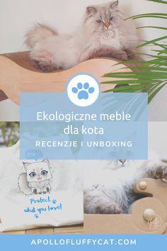 Które ekologiczne meble dla kotów są najlepsze dla Twojego kota? Poznaj moje recenzje, efekty testów i dowiedz się, które ekologiczne meble dla kotów są według nas warte Twojej uwagi! Apollo, Teddy Bear, Lifestyle, Toys, Blog, Animals, Activity Toys, Animales, Animaux